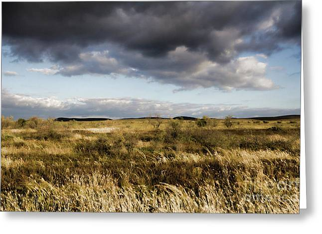 Greeting Card featuring the photograph Flinders Ranges Fields V3 by Douglas Barnard
