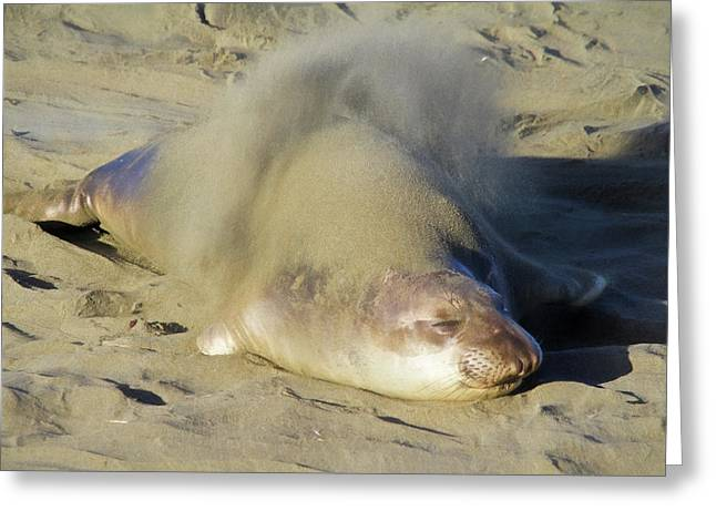 Flippin' Sand Greeting Card by Donna Kennedy