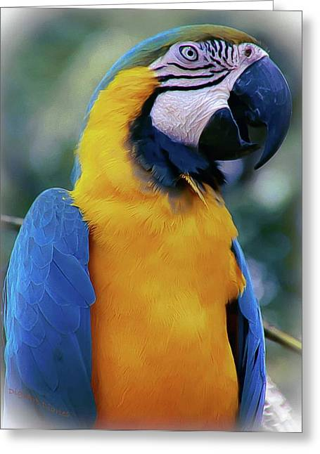 Flirtacious Macaw Greeting Card by DigiArt Diaries by Vicky B Fuller