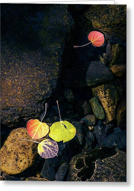 Greeting Card featuring the photograph Floating Aspen Leaves by Alexander Kunz