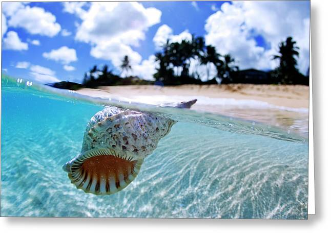 Floating Conch Shell Greeting Card by Sean Davey