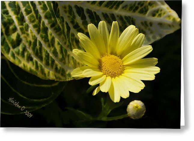 Floating Daisy Greeting Card by Lyle  Huisken