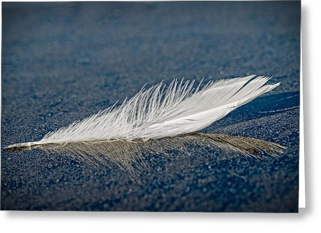 Floating Feather Reflection Greeting Card