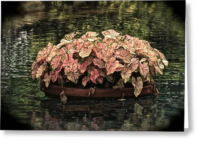 Floating Flower Pot Greeting Card by Mariano Rivera