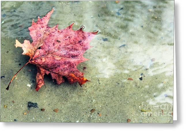 Floating Leaf Closeup Greeting Card
