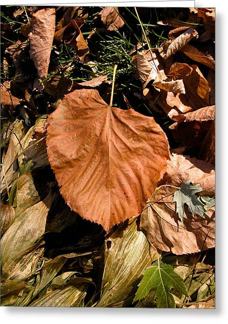 Greeting Card featuring the photograph Floating Leaf by Mike Evangelist
