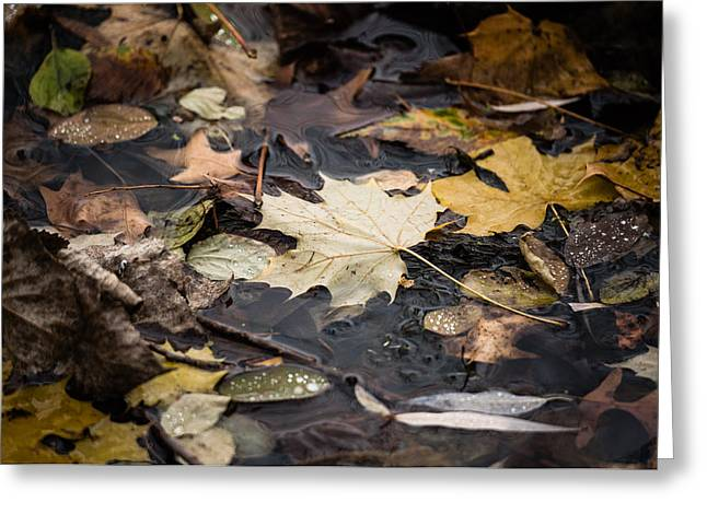 Greeting Card featuring the photograph Floating Leaves by Mike Evangelist