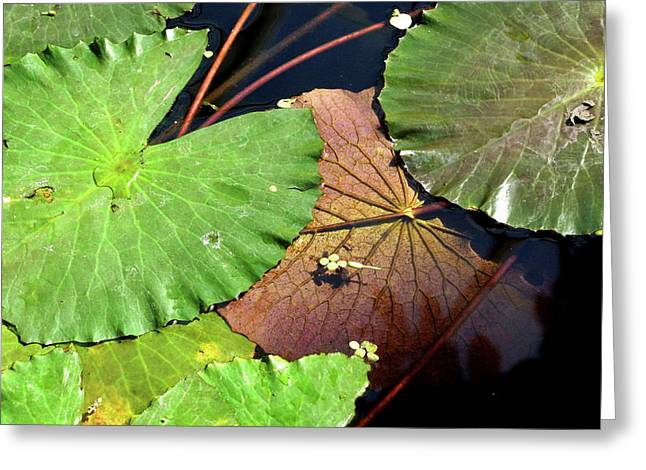 Floating Lily Pads Greeting Card