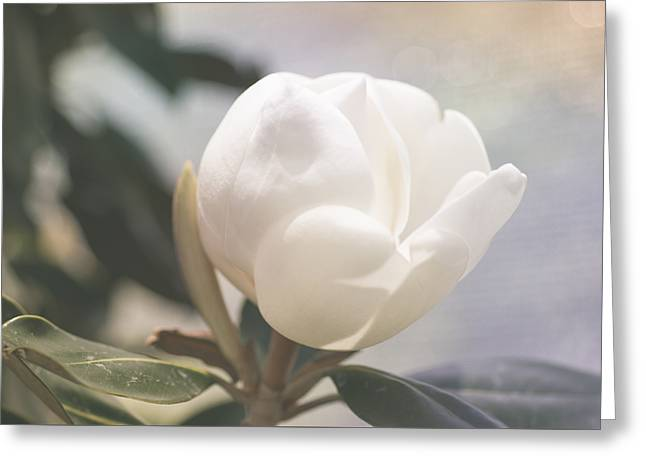 Floating Magnolia Greeting Card