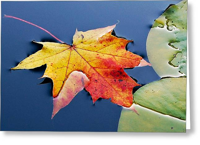 Floating Maple Leaf Greeting Card by Marion McCristall