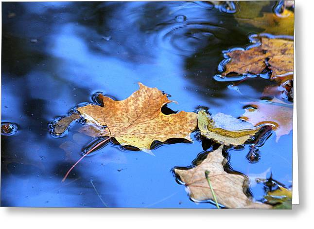 Greeting Card featuring the photograph Floating On The Reflected Sky by Doris Potter