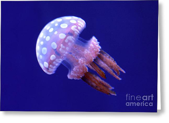 Floating White Spotted Jellyfish Greeting Card by Nina Silver