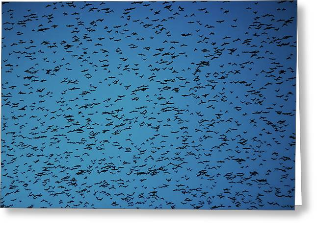 Flock Of Birds Swarming On Blue Sky. Greeting Card