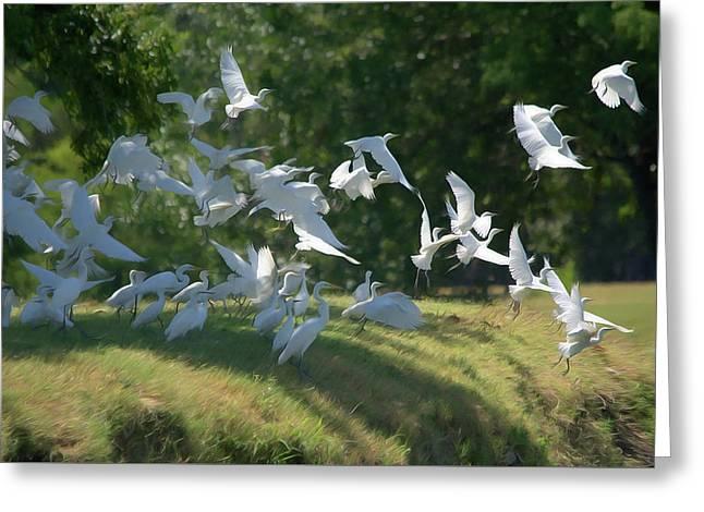 Flock Of Egrets In Flight Greeting Card