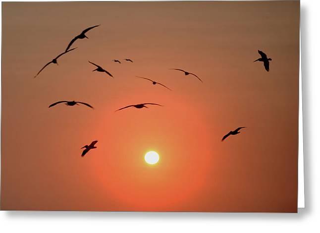 Flock Of Pelicans Greeting Card