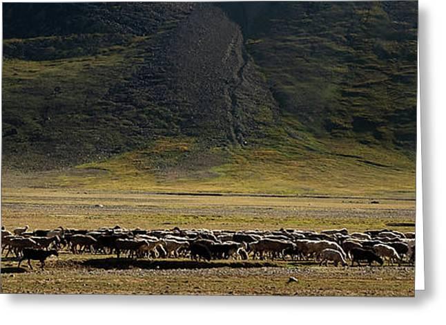 Flock Of Sheep Greeting Card by Konstantin Dikovsky