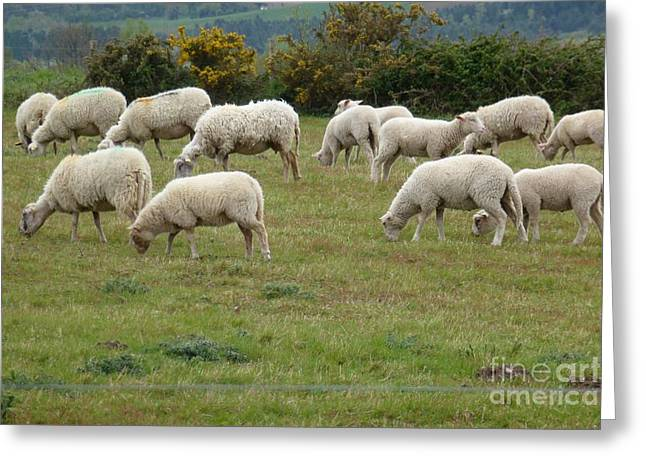 Flock Of Sheeps Greeting Card by Jean Bernard Roussilhe