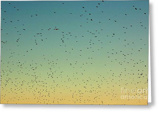 Flock Of Swallows Flying Together At Sunset Greeting Card by Sami Sarkis