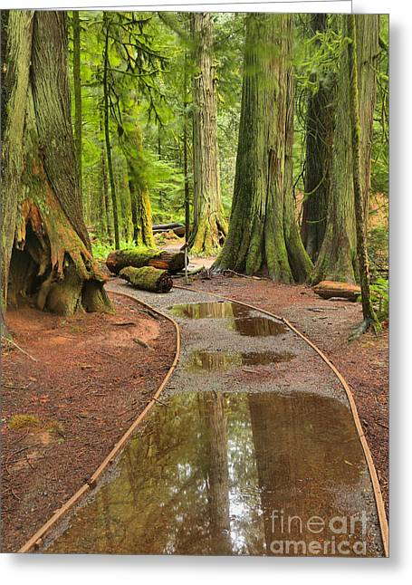 Flooded Pathway Greeting Card by Adam Jewell