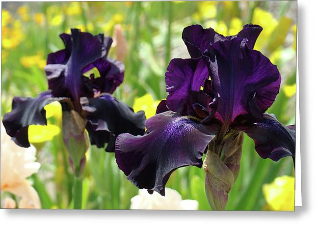Floral Art Deep Purple Iris Flowers Irises Baslee Troutman Greeting Card by Baslee Troutman