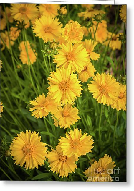 Floral Burst Greeting Card