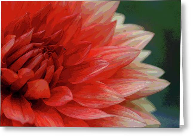 Floral Delight Greeting Card by Mike Martin