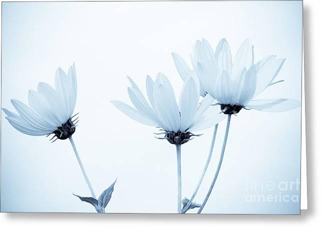 Floral Elegance Greeting Card