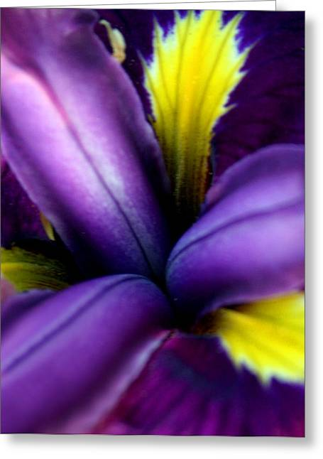 Floral Explosion Greeting Card by Alexandra Harrell