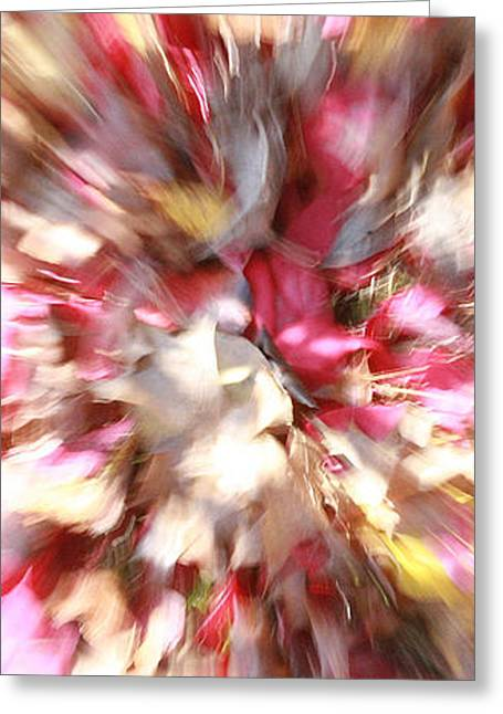 Floral Explosion No1 Greeting Card