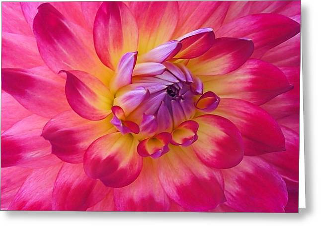 Floral Fantasia Greeting Card