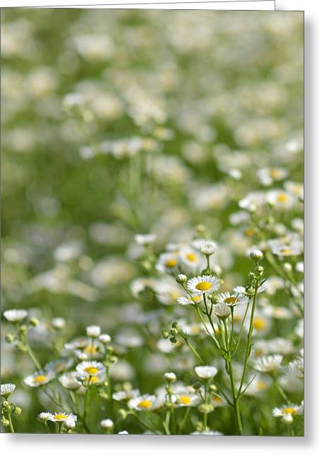 Floral Field #1 Greeting Card