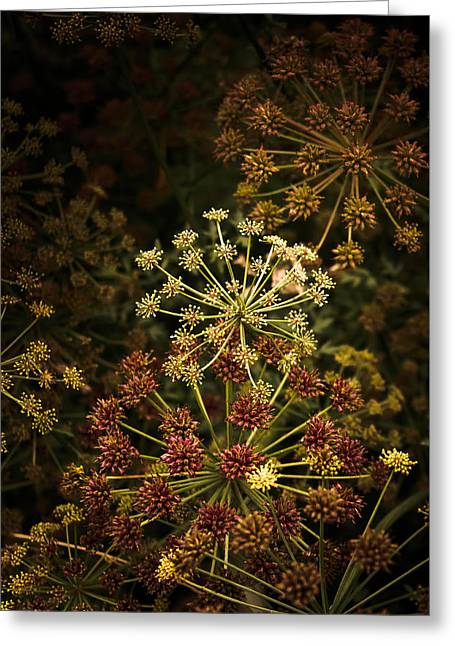 Floral Fireworks #02 Greeting Card by Loriental Photography