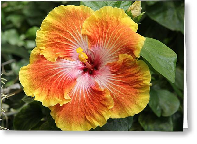Floral - Flower - Life Design Greeting Card by Kathy Bassett