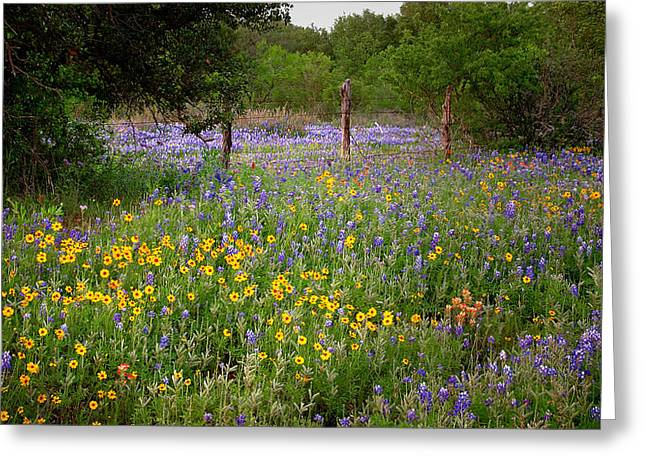 Bluebonnet Landscape Greeting Cards - Floral Pasture No. 2 Greeting Card by Jon Holiday
