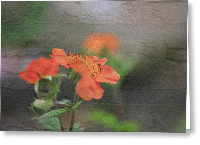 Floral Photo Of Orange Spring Flower And Texture Greeting Card