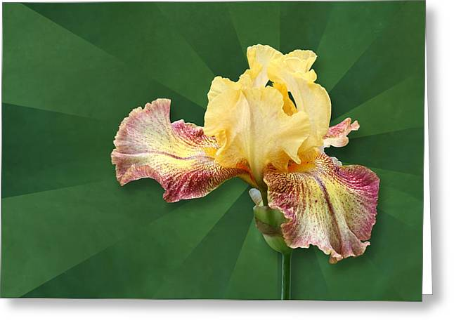 Floral Radiance Greeting Card
