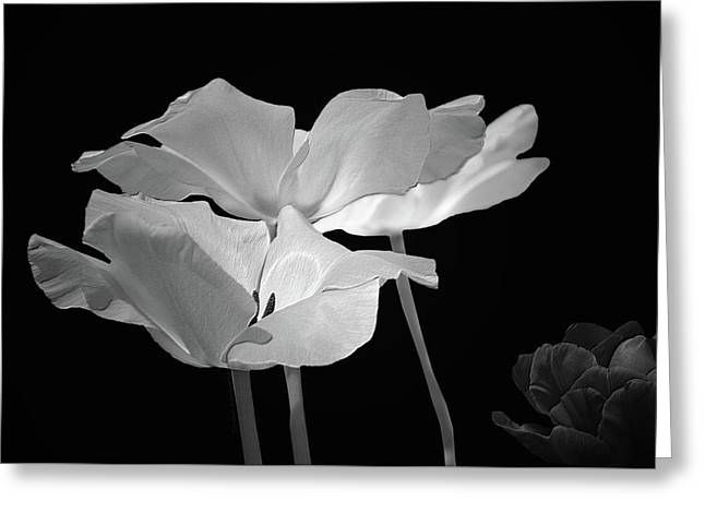 Floral Spring Tulips 2017 Bw 01 Greeting Card