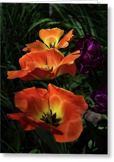 Floral Spring Tulips 2017 Early Morning Vertical Greeting Card