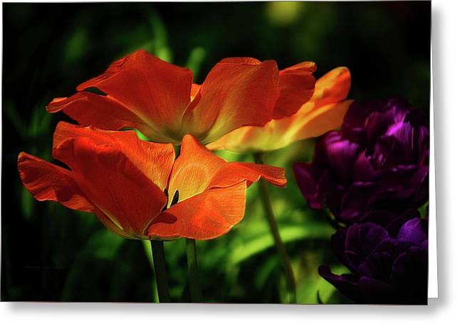 Floral Spring Tulips 2017 Greeting Card