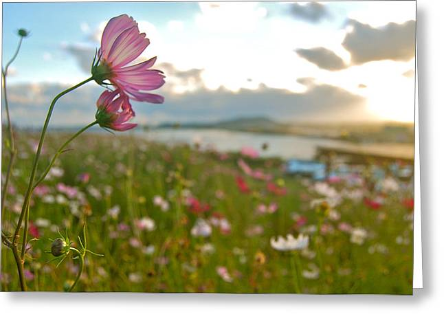 Floral Sunset Greeting Card by Yen