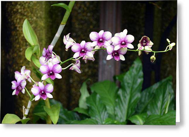 Floral Sway Greeting Card by Deborah  Crew-Johnson