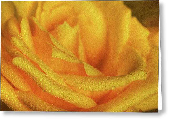Greeting Card featuring the photograph Floral Yellow Rose Blossom by Shelley Neff