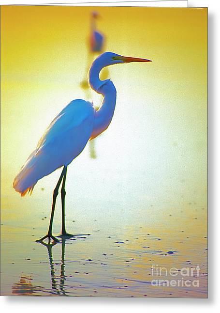 Florida Atlantic Beach Ocean Birds  Greeting Card