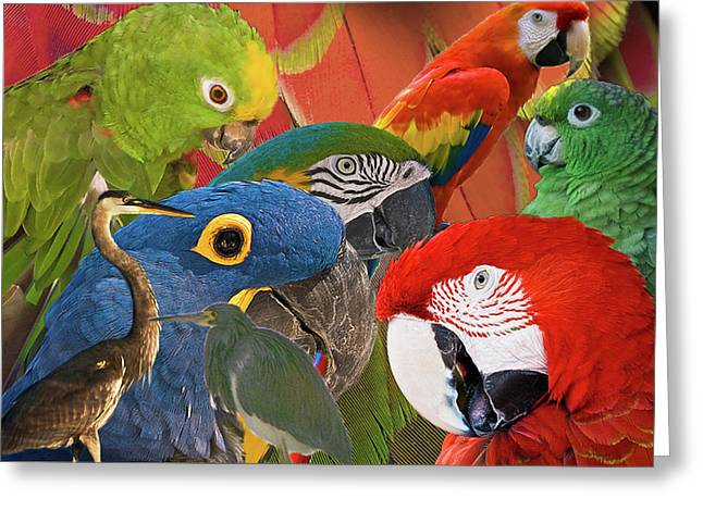 Florida Birds Greeting Card