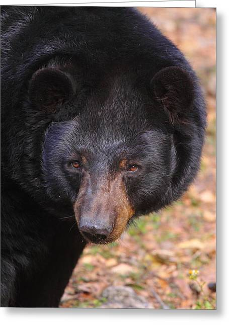 Florida Black Bear Greeting Card
