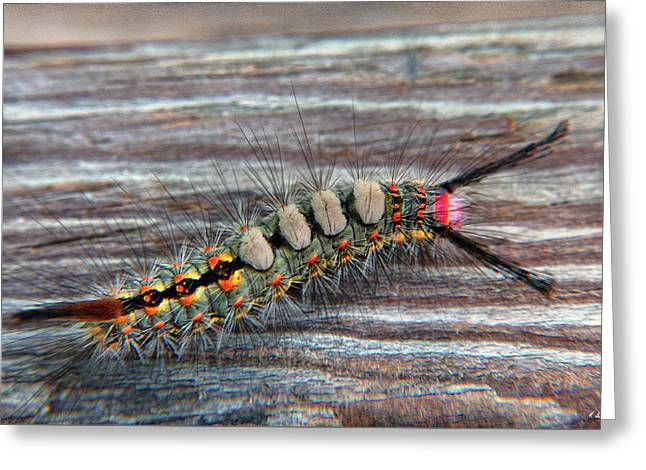 Florida Caterpillar Greeting Card by Hanny Heim