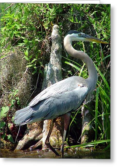 Florida Crane Greeting Card by Mindy Newman