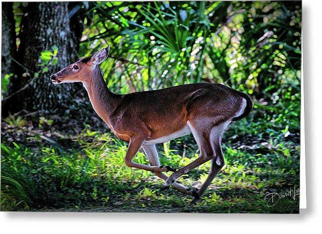 Florida Deer Greeting Card