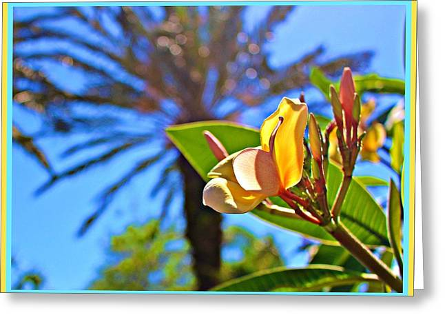 Florida Essence Greeting Card by Mindy Newman