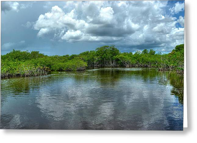 Florida Everglades Greeting Card